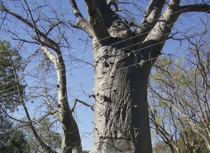 [tree_toilet_01.jpg]