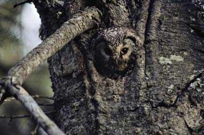 [Image: animal-camouflage-05.jpg]