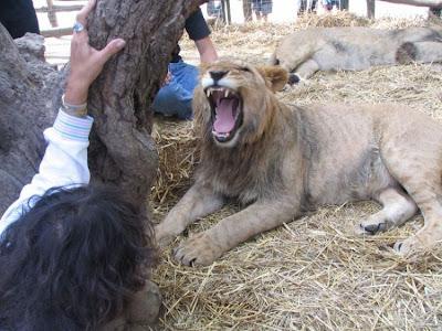 Kebun Binatang Paling Berbahaya di Dunia - Lujan Zoo32