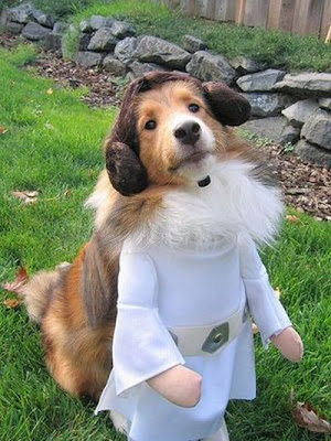 Roupas para Cachorros | Star Wars