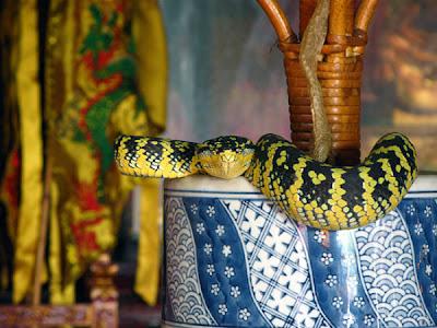 معبد الثعبان بماليزيا رائ    ع
