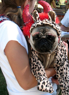 35 Sad Pugs In Costumes Damn Cool Pictures