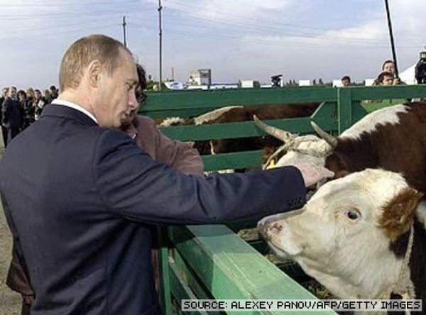 cute photos of vladimir putin with animals