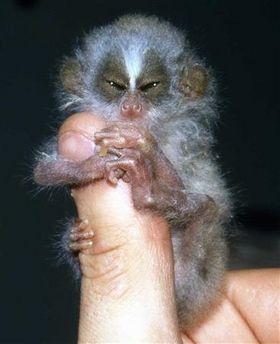 http://1.bp.blogspot.com/_mmBw3uzPnJI/TQje_f25ncI/AAAAAAAB0n8/8rxHb_iL7-k/s1600/finger_monkeys_13.jpg