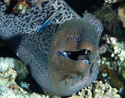 http://1.bp.blogspot.com/_mmBw3uzPnJI/TRBkZY0JOmI/AAAAAAAB1bY/AEfbVsnRmLw/s400/ugliest_and_scariest_fishes_07.jpg