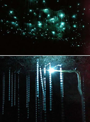 Waitomo Glowworm Cave (New Zealand)