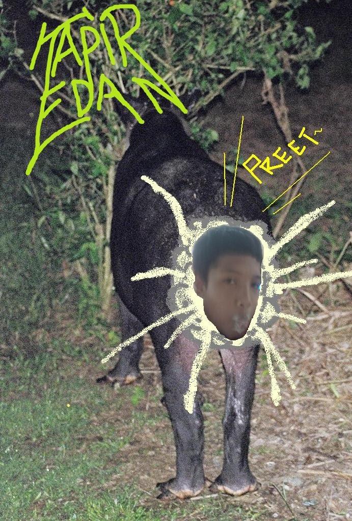 Tapir Edan