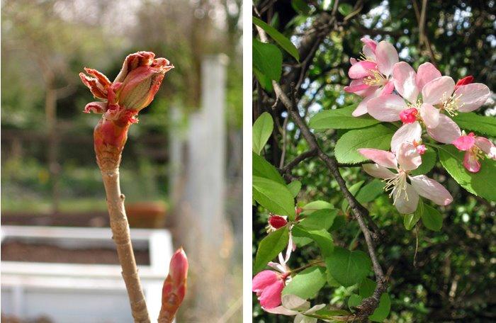 [spring_unfurl_1.jpg]