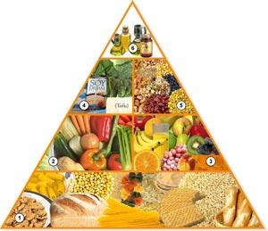 [piramidenutricion05xo6.jpg]