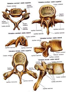 El instituto por ello burdenko los tratamientos de la columna vertebral