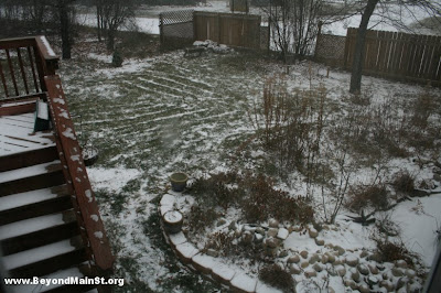 snow on garden 11:04 AM