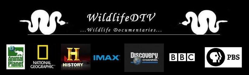 WildlifeDTV