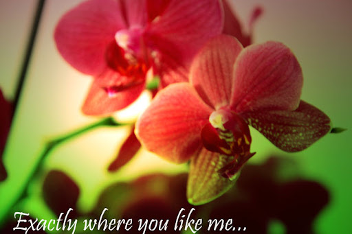exactly where you like me...