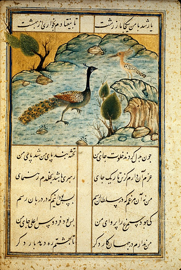 illustrations of birds. Images from manuscript