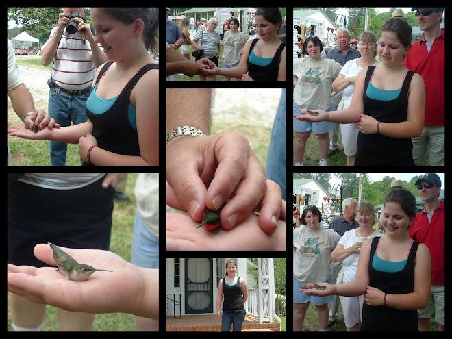 Hummingbird Festival