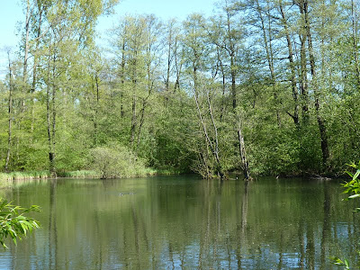 Stadtpark, Hamburg, Teich