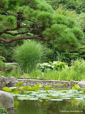 Japanischer Garten, Hamburg, Klein Flottbek
