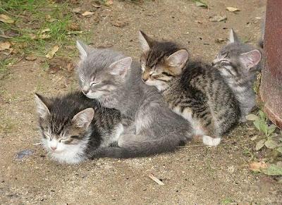 [Image: places_cat_sleep_001.jpg]
