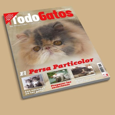 Todo Gatos