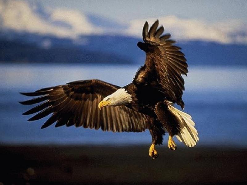 [Eagles_0.jpg]