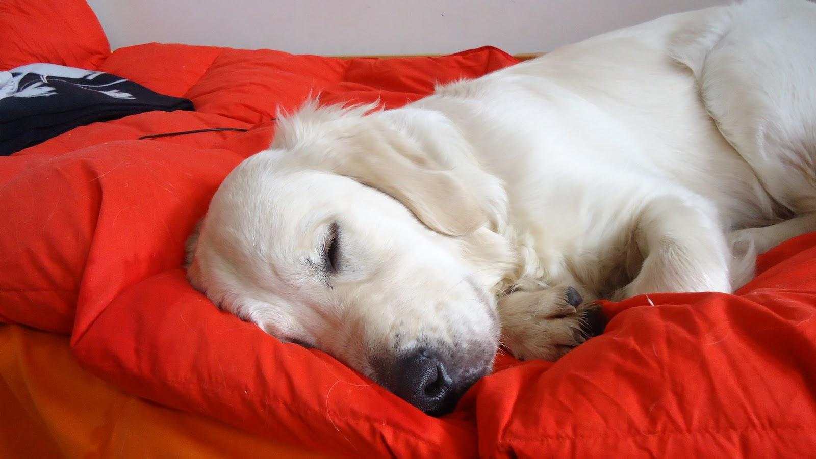 Corri col tuo cane il cane delle nevi ovvero come i cani reagiscono al freddo - Educare il cane a non salire sul divano ...