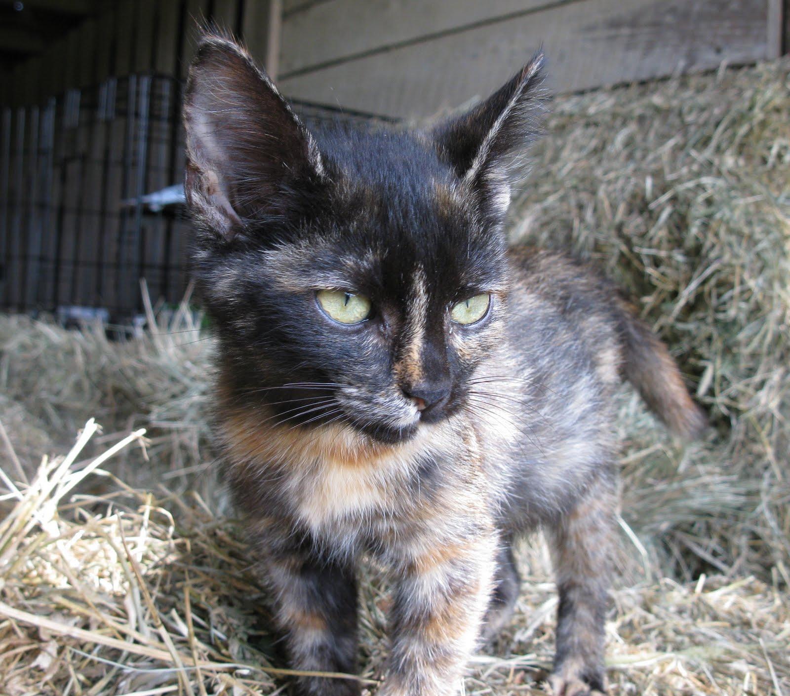Picture Cat Savaging Vet