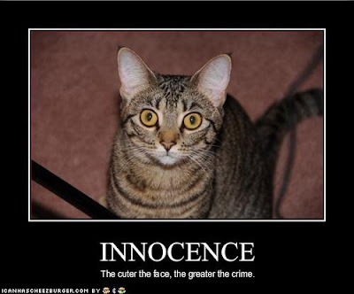 Funny Cat Photos - lolcat photos funny cat picture - funny cat pictures-OLCat-of-the-week-3
