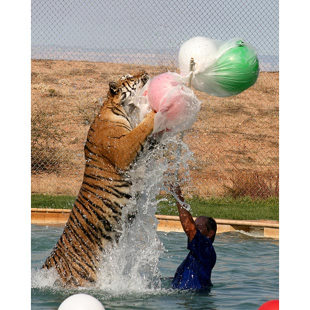 http://1.bp.blogspot.com/_n26hr1BVNx0/S6_PpPvnDCI/AAAAAAAAKDE/dmQdWDEhOqs/s1600/Tigers+1.jpg