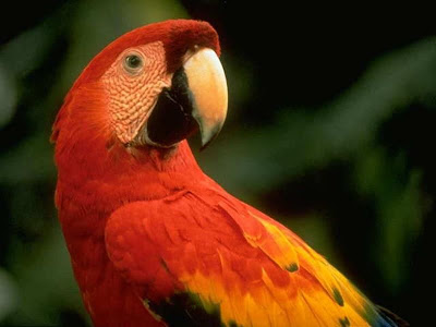 Cute Colorful Parrots Around the World