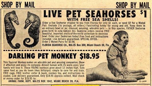 Dumneazu The Mysterious Pet Monkey Ads Of The 1960s