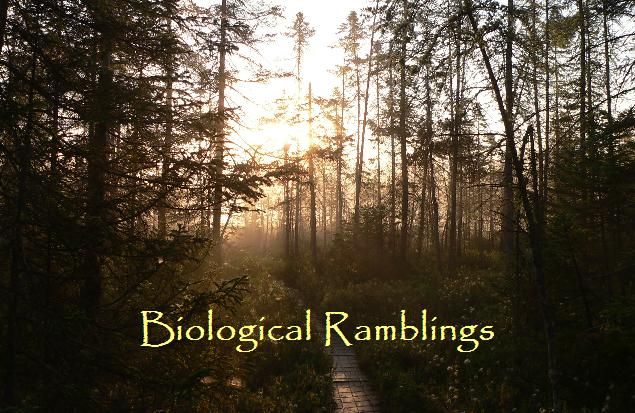 Biological Ramblings