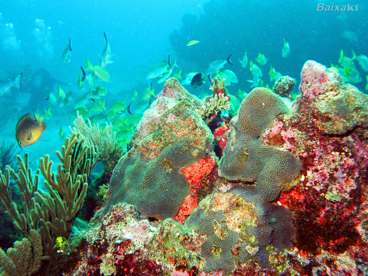 Download now apk fundo do mar docinhos