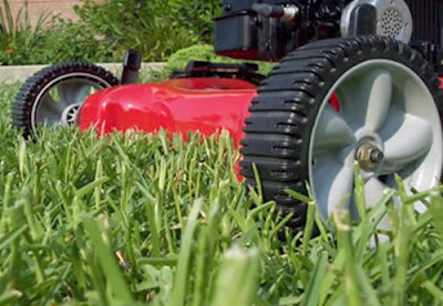 lawn doctor for lawn services