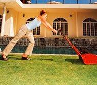 organic lawn care lawn doctor