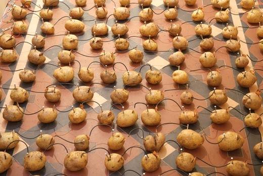 potato_battery.jpg