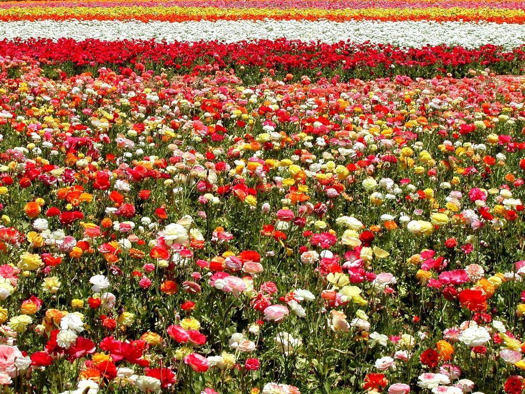 Mental hesitation - Fotos de flores de jardin ...