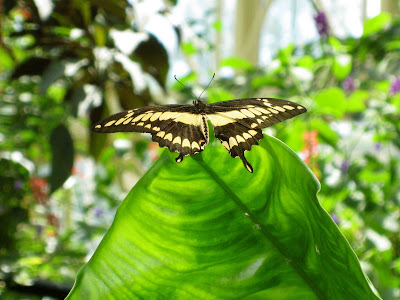 Butterfly Center photo2