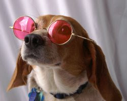 rose_colored_glasses.jpg