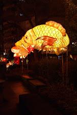 Carp Lanterns