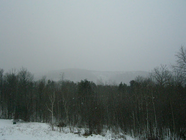 Snowing in a wooded area in New Hampshire.