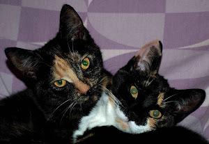 Jiriki en Zidaya