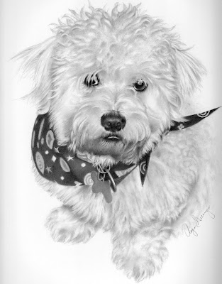 How To Draw A Bichon Dog Image Search Results