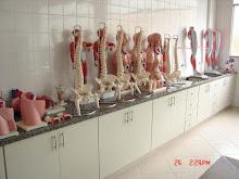 Laboratório 2