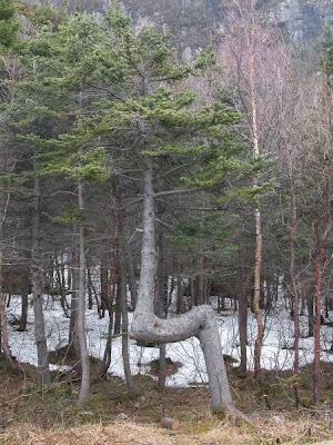 strange and funny trees 48 Pohon Aneh Yang Tumbuh Di Tempat Aneh