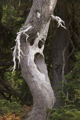 strange and funny trees 03 Pohon Aneh Yang Tumbuh Di Tempat Aneh
