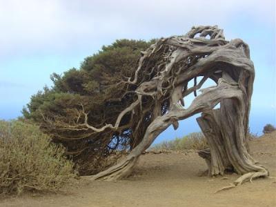 strange and funny trees 20 Pohon Aneh Yang Tumbuh Di Tempat Aneh