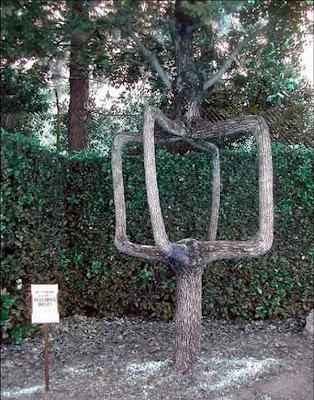 strange and funny trees 13 Pohon Aneh Yang Tumbuh Di Tempat Aneh