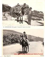 Os burros no tempo antigo. Clique em cima da imagem!