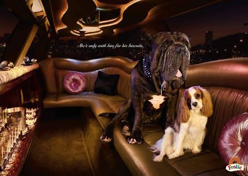 Mercantile doggies