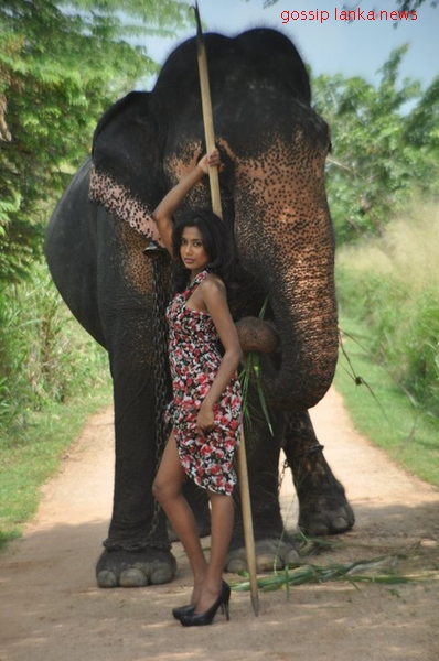 sexy girls and elephant sex